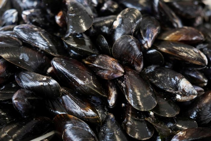 The mussel is the hoover of the sea, taking in phytoplankton for nourishment along with microplastics, pesticides and other pollutants - which makes it an excellent gauge. (AFP file photo)