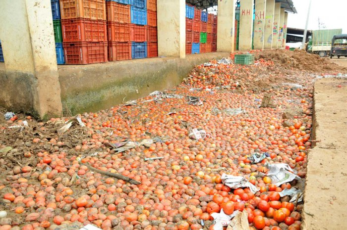 The drain at the APMC yard in Chikkamagaluru is choked by rotten tomatoes.