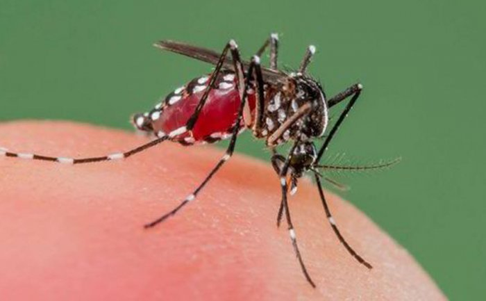 Research found proteins in the legs of malaria carrying mosquitoes help them develop resistance to insecticides. (DH Photo)