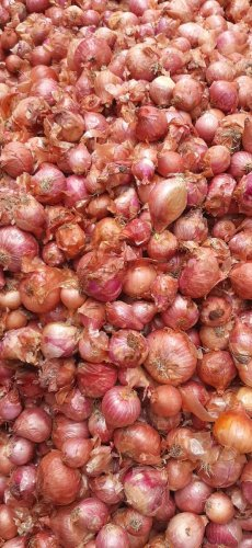 Onions in the market.