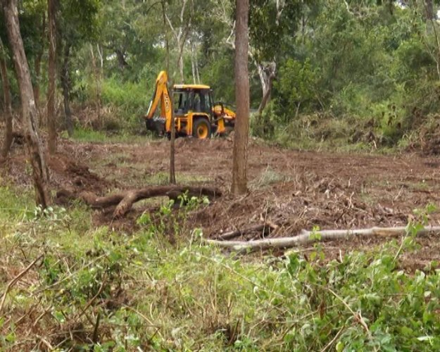 Large trees are being uprooted using an earthmover in the buffer zone in Kodagu.
