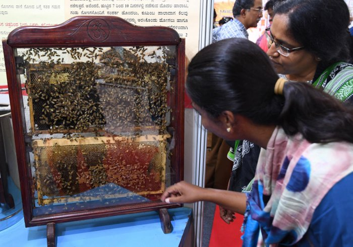 Honeybees in a glass hive at the Honey Farmers Festival in Lalbagh on Friday. DH Photo/Pushkar V