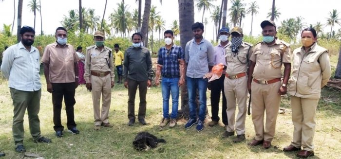 A bear cub was found dead at K Bidare in Kadur.