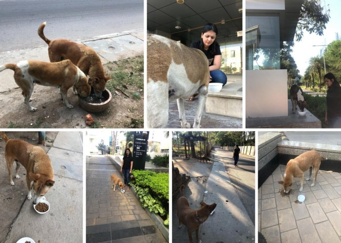 A group of dog lovers have been feeding hungry stray dogs during lockdown.