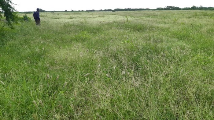 This is the first time since Independence that this grassland has been demarcated.