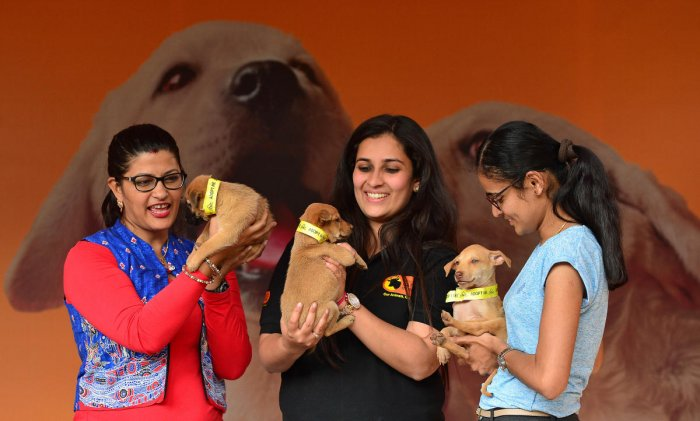 The dog lovers are worried about having to part with their pets, the animal activists say the move will lead to the abandonment of dogs. Various animal activists and the pet lovers meet City Mayor R Sampath Raj on Wednesday and requested to remove the cap on the number of dogs allowed in people's home. DH file photo for representation.