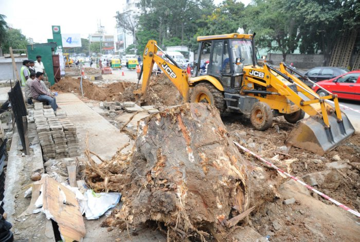 The Bruhat Bengaluru Mahanagara Palike has notified the permission to axe the trees in an order on May 21. DH file photo/Srikanta Sharma R