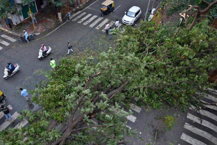 Several branches fall on Sampige road, Bengaluru following heavy rains damaging vehicles and causing slow moving traffic. DH Photo/ Pushkar V