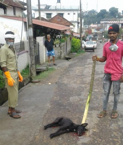 An operation to detect and kill rabies-infected dogs was carried out on Saturday.