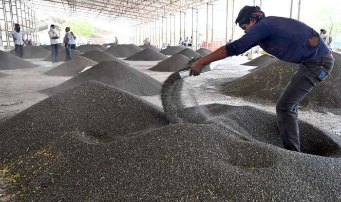 A labourer sorts pulses at a market, during ongoing COVID-19 lockdown. PTI photo for representation