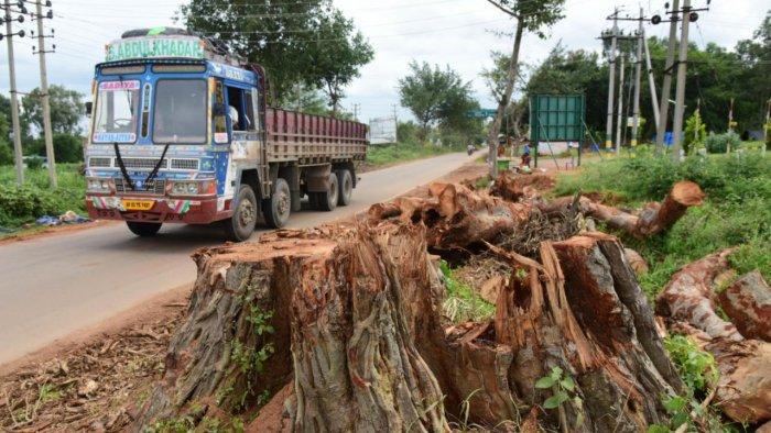 Trees axed as part of a road-widening project between Nelamangala and Doddaballapura. DH Photo/B H Shivakumar