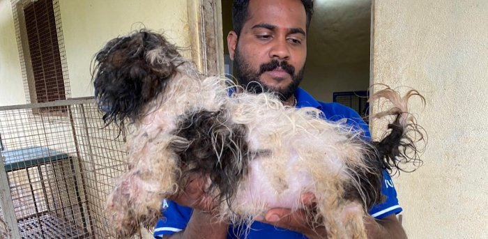Puttenahalli Police acknowledged that the breeder had not yet been arrested. Photo Courtesy: Alwyn Sebastian