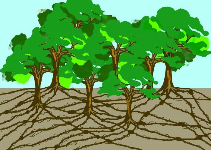 World wood web