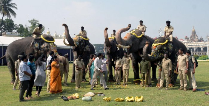 Puja was offered to Dasara elephants before leaving to forest camps from Mysuru Palace premises in Mysuru. DH PHOTO