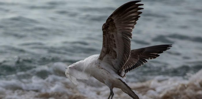 A seagull struggles to take flight covered by a plastic bag. Credit: AFP Photo