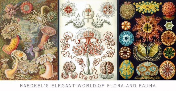 Haeckel's elegant world of flora and fauna