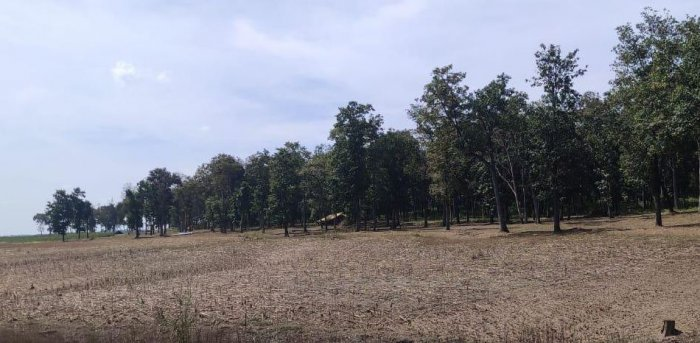 1500 Acres Of Reserve Forest Turned Into Agricultural Field In Karnataka