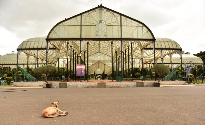 A glass house in Lalbagh. Credit: DH.