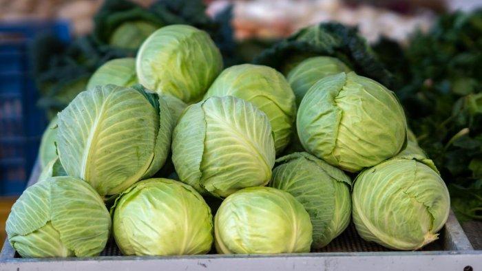 Fact-check: Do cabbages spread Covid-19?   Deccan Herald