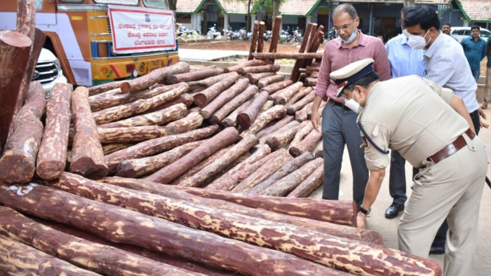 Senior police officers inspect the red sanders seized. Credit: DH Photo