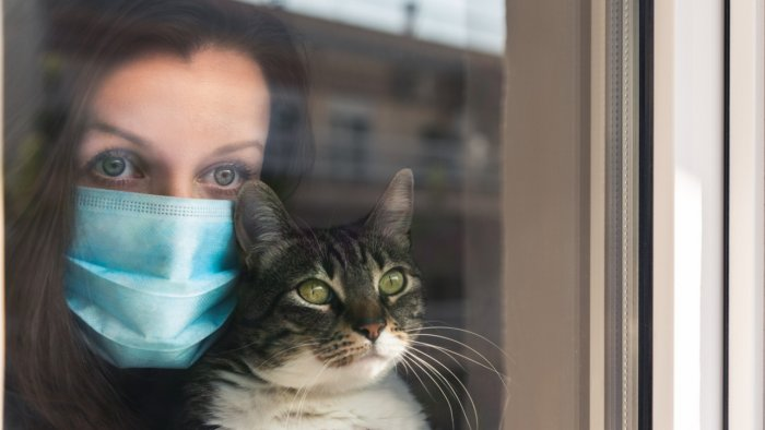 There is currently no major risk from our pet cats and dogs. Credit: iStock Photo