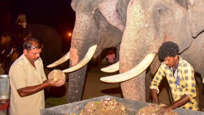 On Wednesday, special food was offered to the Dasara elephants at Mysuru Palace.  Credit: photo DH