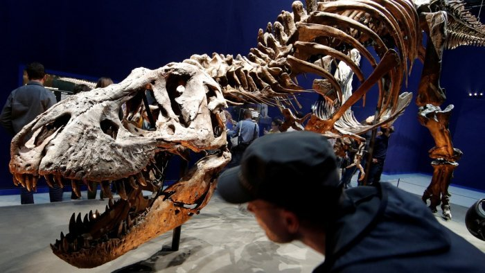 """Visitors look at a 67 million year-old skeleton of a Tyrannosaurus Rex dinosaur, named Trix, during the first day of the exhibition """"A T-Rex in Paris"""" at the French National Museum of Natural History in Paris. Credit: Reuters File Photo"""