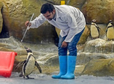 Byculla Zoo celebrates the third birthday of Mr. Molt, one of the Humboldt penguin in Mumbai. (PTI Photo)