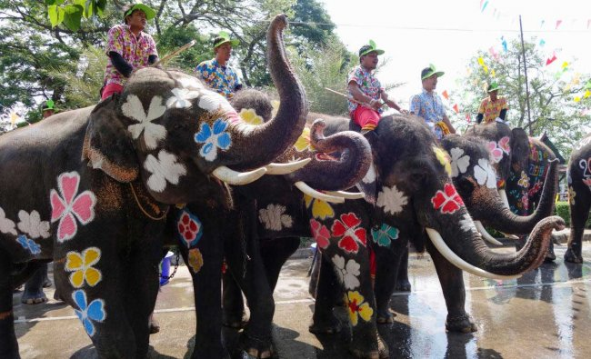 Painted elephants are seen during the celebration of Songkran Water Festival, to commemorate Thailand\'s New Year in Ayutthaya. Reuters Photo