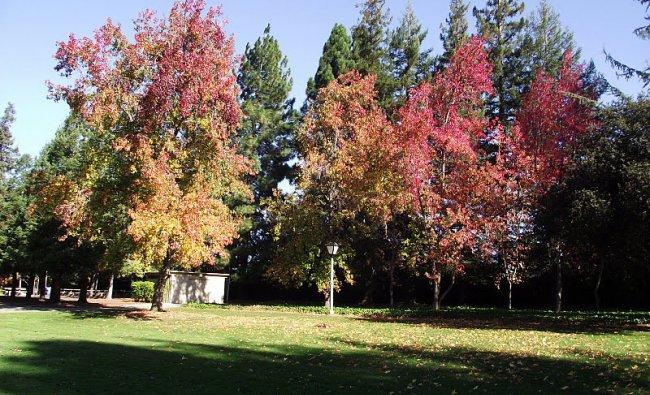 Fall season in Sunnyvale, San Francisco