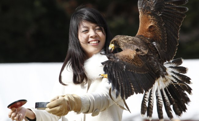 Visitor Asuka Saito reacts as a Harris\'s Hawk lands on her arm