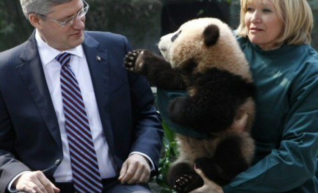 Canadian Prime Minister Stephen Harper looks on as his wife Laureen holds a panda in Chongqing