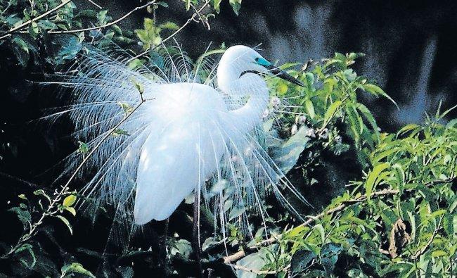 Mystique beauty at Ranganathittu Bird Sanctuary