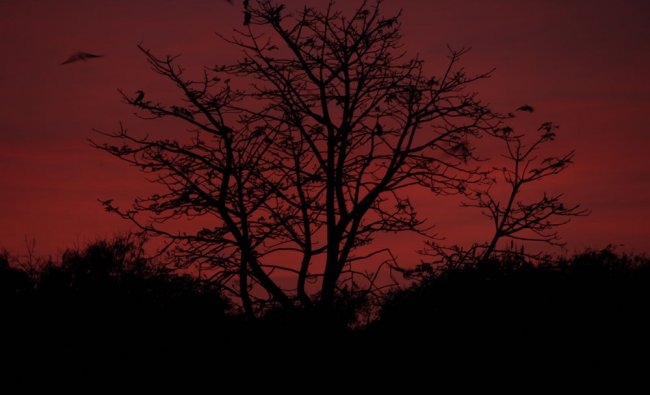 Twilight at Lalbagh