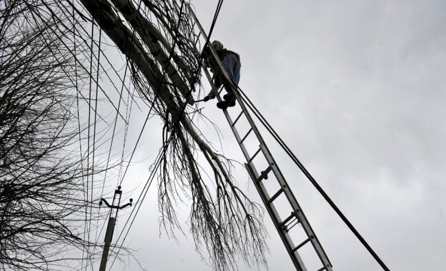 An electrician attempts to disentangle branches of a tree from electrical wires in Srinagar