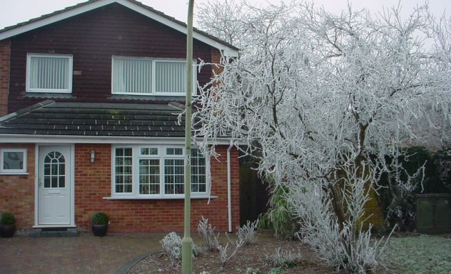 Tree branches covered with frost in Hampshire, UK