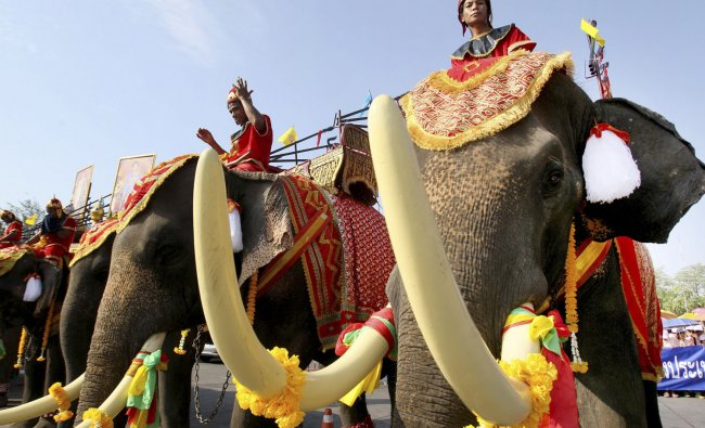 Elephants take part in a May Day rally in Bangkok