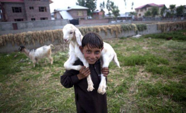 Bakarwal nomadic child from Srinagar...