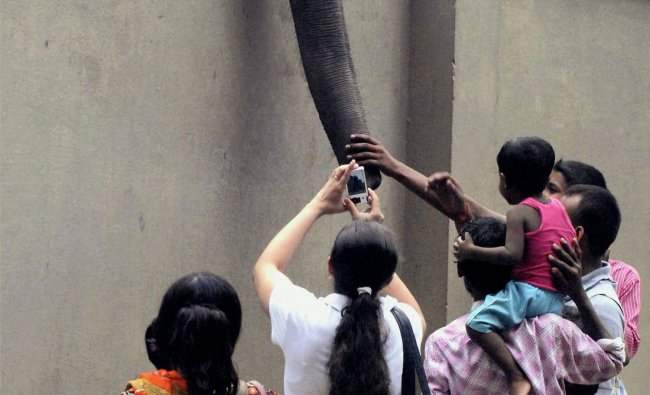 Visitors, standing near the boundary wall of zoo, enjoy watching an elephant in Kolkata