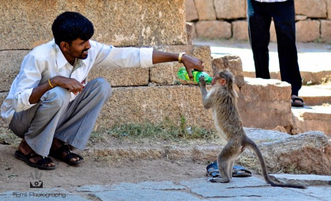 A man helping a monkey quench its thirst in Chitradurga