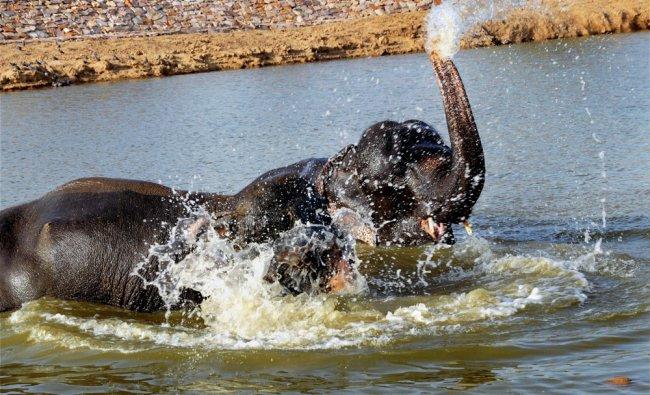 Elephants beating the heat as temperature rises...