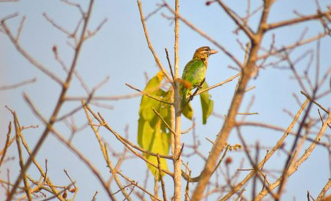 Birds in Bangalore