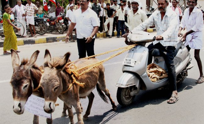 AIADMK worker rides a scooter being pulled by donkeys during a protest against petrol price hike