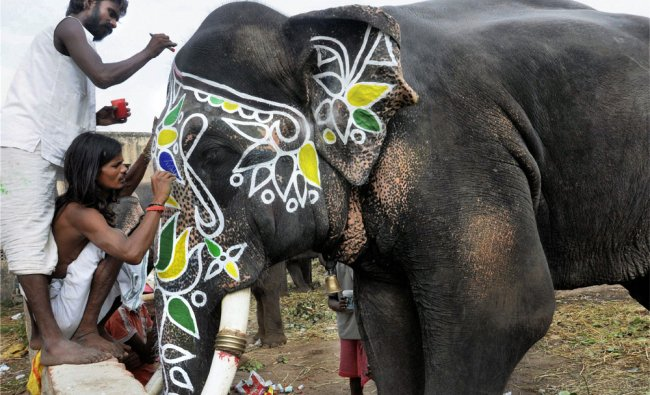 Mahouts decorate an elephant at the Lord Jagannath Temple in Ahmedabad