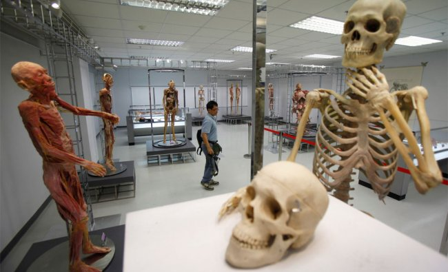 A photographer looks at exhibits at Museum of Human Body in Bangkok