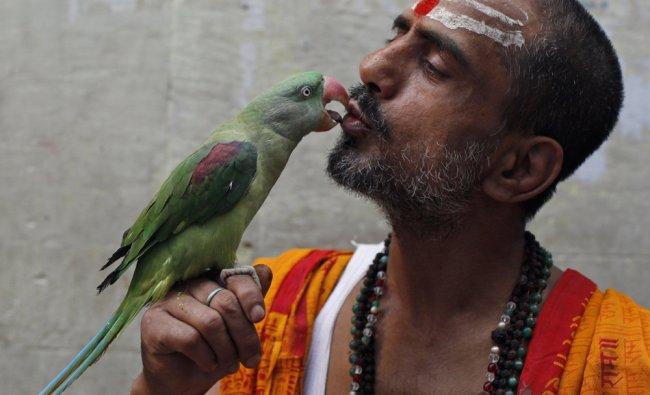 Hindu priest Ishwar Dutt Sharma kisses his parrot Ganga Ram