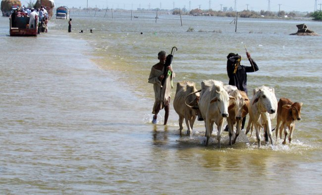 Pakistani flood affected villagers wade through floodwaters