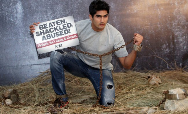 Boxer Vijender Singh, chained and shackled, take part in a new PETA campaign cruelty to animals ...