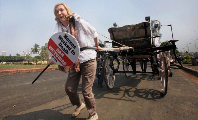 Founder member of People for the Ethical treatment of animals (PETA) Ingrid E Newkirk pulling a...