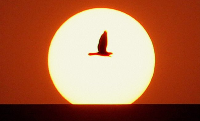A bird flies as the Sun sets in the sky in New Delhi on Friday. PTI